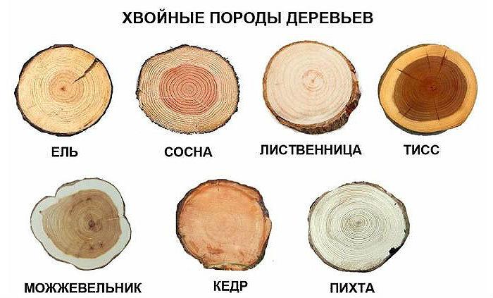 Хвойные породы дерева для обшивки лестниц